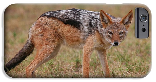 Addo iPhone Cases - Jackal iPhone Case by Bruce J Robinson