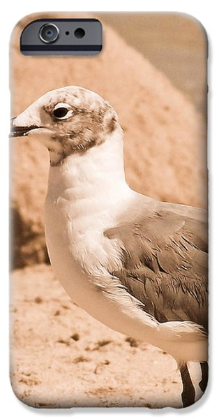 Seagull iPhone Cases - Jagr iPhone Case by Trish Tritz