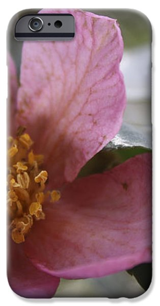 January Camelia 2 iPhone Case by Teresa Mucha