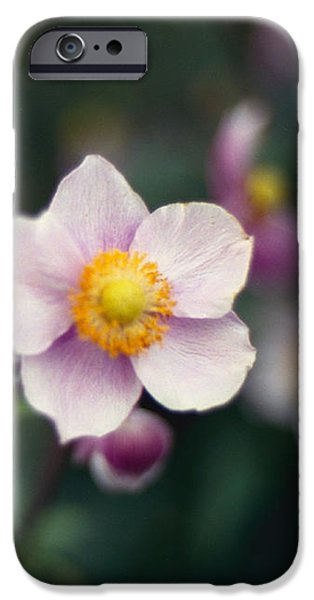 Japanese Anemone  iPhone Case by Marcio Faustino