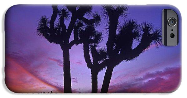 California Quail iPhone Cases - Joshua Tree Group At Sunrise Near Quail iPhone Case by Tim Fitzharris