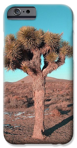 Field. Cloud iPhone Cases - Joshua Tree iPhone Case by Naxart Studio
