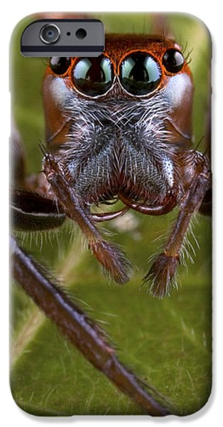 Jumping Spider Papua New Guinea iPhone Case by Piotr Naskrecki