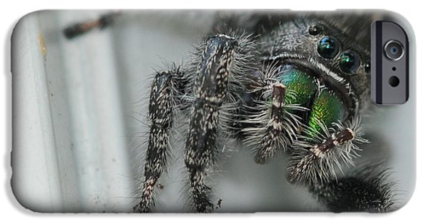 Jumping Spiders iPhone Cases - Jumping Spider iPhone Case by Paul Ward