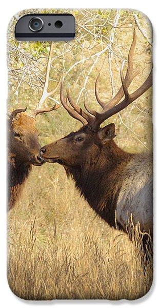Junior Meets Bull Elk iPhone Case by Robert Frederick