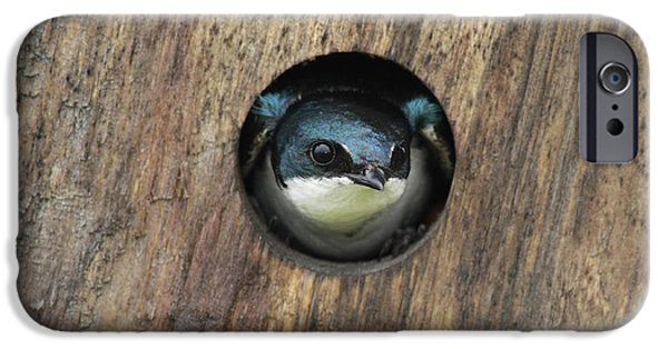 Best Sellers -  - Barn Swallow iPhone Cases - Just a quick peek iPhone Case by Gord Patterson