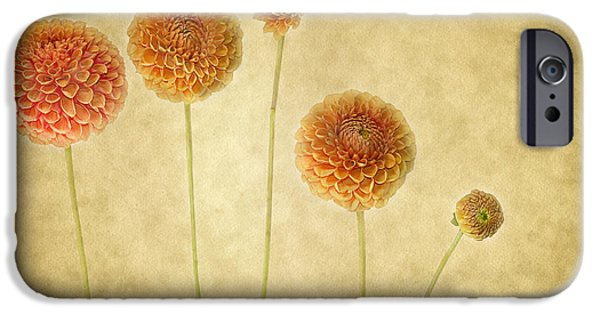 Dahlia iPhone Cases - Just Dahlia-ing Around iPhone Case by Rebecca Cozart