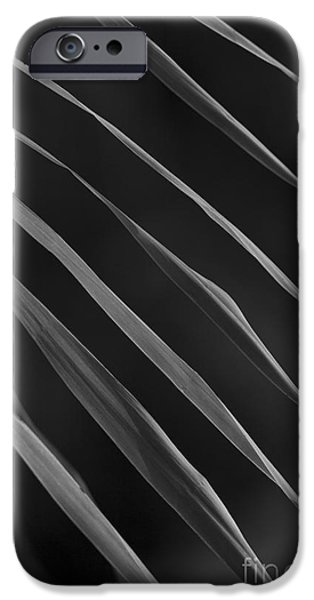 Just Grass bw iPhone Case by Heiko Koehrer-Wagner
