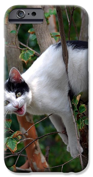 Pictures Of Cats Photographs iPhone Cases - Just Hangin Out iPhone Case by Skip Willits