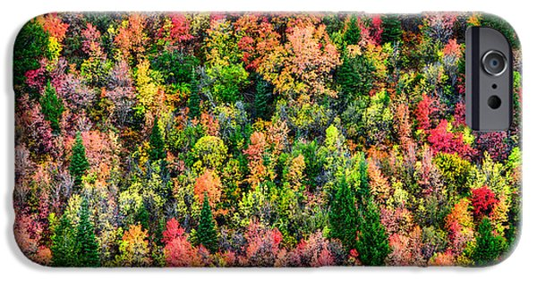 Fall Colors iPhone Cases - Just in Time iPhone Case by Chad Dutson