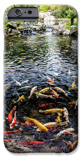 Japanese School iPhone Cases - Kauai Koi Pond iPhone Case by Darcy Michaelchuk