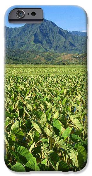 Kauai, Wet Taro Farm iPhone Case by Himani - Printscapes