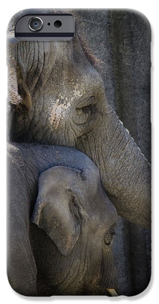 Elephants Photographs iPhone Cases - Keep Me Close iPhone Case by Rebecca Cozart