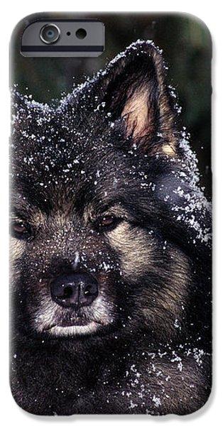 Keeshond Dog, Winnipeg, Manitoba iPhone Case by Mike Grandmailson