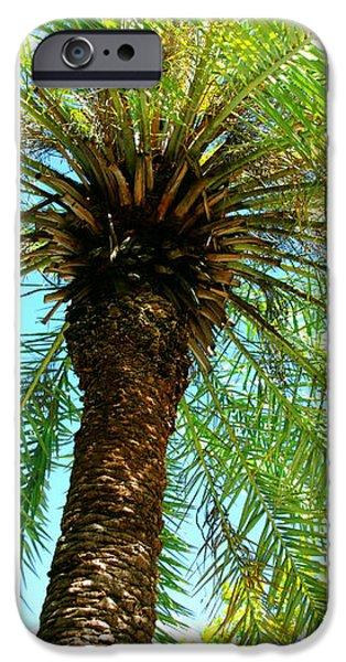 Key West Palm Triplets iPhone Case by Susanne Van Hulst