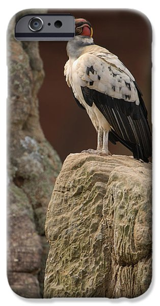 Papa iPhone Cases - King Vulture Sarcoramphus Papa Perched iPhone Case by Pete Oxford