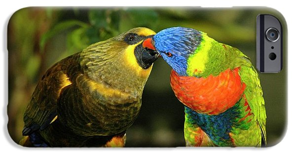 Parakeet iPhone Cases - Kissing Birds iPhone Case by Carolyn Marshall
