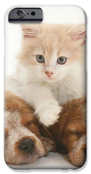 Kitten And Puppies iPhone Case by Jane Burton