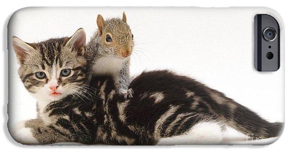 Sciurus Carolinensis iPhone Cases - Kitten And Squirrel iPhone Case by Jane Burton