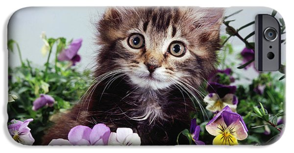 Animal Portraiture iPhone Cases - Kitten With Pansies iPhone Case by Jane Burton