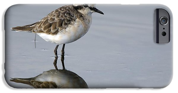 Fauna iPhone Cases - Kittlitzs Plover iPhone Case by Peter Chadwick