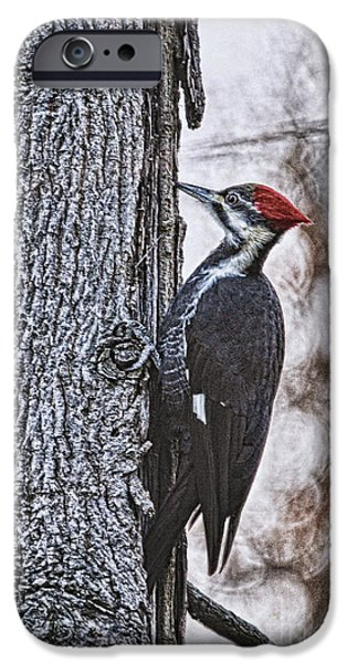 Woodpecker iPhone Cases - Knock Knock iPhone Case by Lois Bryan