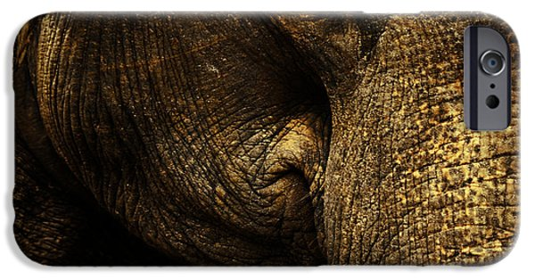 Elephants Photographs iPhone Cases - Knowing iPhone Case by Andrew Paranavitana