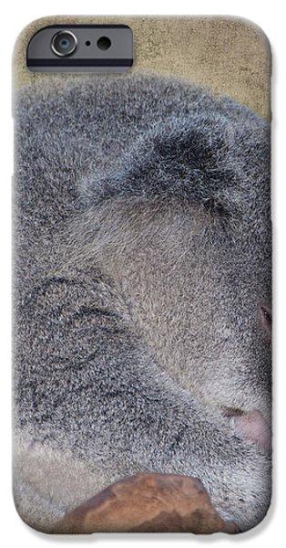 Koala Sleeping iPhone Case by Betty LaRue