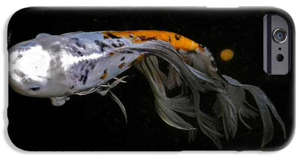 Butterfly Koi Photographs iPhone Cases - Koi and Coins iPhone Case by Kirsten Giving