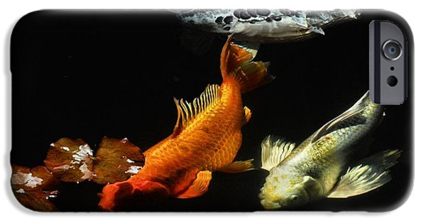 Butterfly Koi Photographs iPhone Cases - Koi by the Lillies iPhone Case by Don Mann