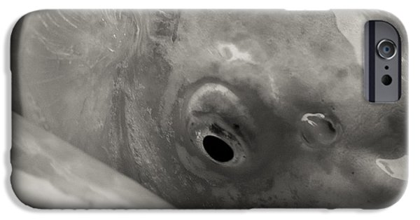 Japanese School iPhone Cases - Koi Eye in Black and White iPhone Case by Darcy Michaelchuk