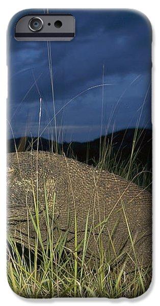 Komodo Dragon Varanus Komodoensis iPhone Case by Cyril Ruoso