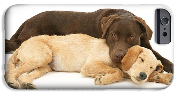 Chocolate Lab iPhone Cases - Labradoodle And Labrador Retriever iPhone Case by Jane Burton