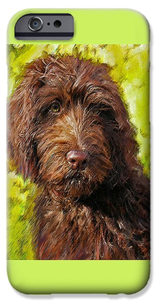 Mixed Labrador Retriever iPhone Cases - Labradoodle iPhone Case by Jane Schnetlage