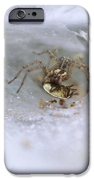 Arachnida iPhone Cases - Labyrinth Spider iPhone Case by Adrian Bicker
