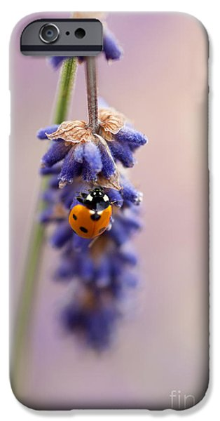 Close Up Floral iPhone Cases - Ladybird and Lavender iPhone Case by John Edwards