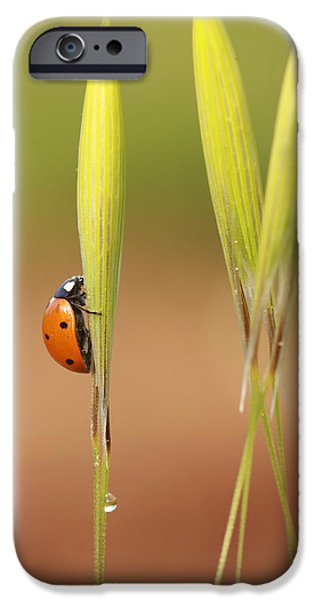 Bugs Pyrography iPhone Cases - Ladybug iPhone Case by Alon Meir