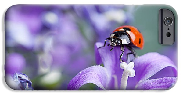 Ladybug iPhone Cases - Ladybug and Bellflowers iPhone Case by Nailia Schwarz