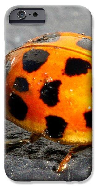 Ladybug Folding Wings iPhone Case by Mark J Seefeldt