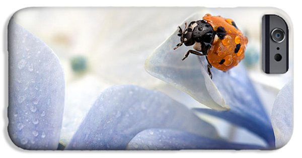 Close Up Floral iPhone Cases - Ladybug iPhone Case by Nailia Schwarz