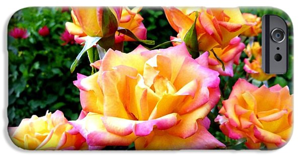 Floribunda iPhone Cases - Lake Country Roses iPhone Case by Will Borden