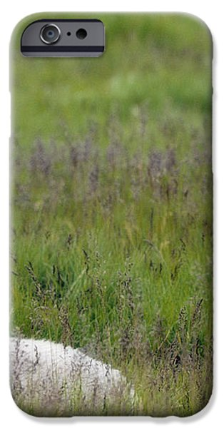 Lamb In Pasture, Alberta, Canada iPhone Case by Darwin Wiggett