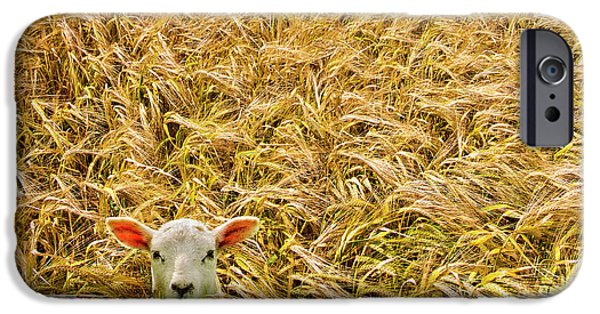 Farming Photographs iPhone Cases - Lamb With Barley iPhone Case by Meirion Matthias