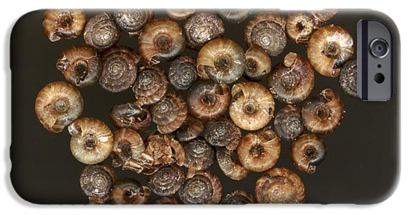 Shell Spiral iPhone Cases - Land Snails iPhone Case by Ted Kinsman