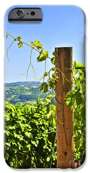 Serbia iPhone Cases - Landscape with vineyard iPhone Case by Elena Elisseeva