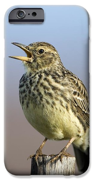 Addo iPhone Cases - Large-billed Lark iPhone Case by Peter Chadwick