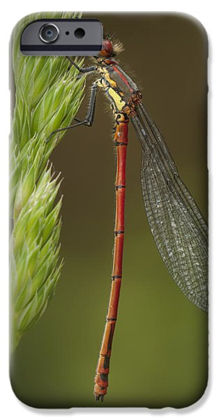 World Changing iPhone Cases - Large Red Damselfly iPhone Case by Andy Astbury