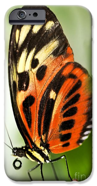 Stamen iPhone Cases - Large tiger butterfly iPhone Case by Elena Elisseeva