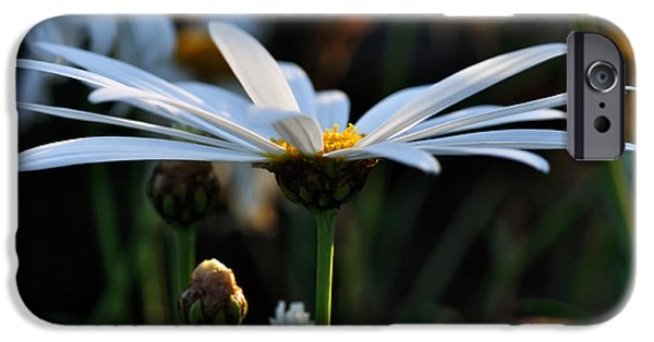 Daisy Bud iPhone Cases - Last Glimpse of Sunshine iPhone Case by Kaye Menner
