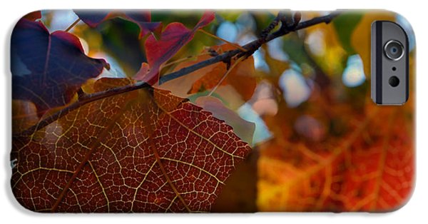 Fall iPhone Cases - Late Autumn Colors iPhone Case by Stephen Anderson